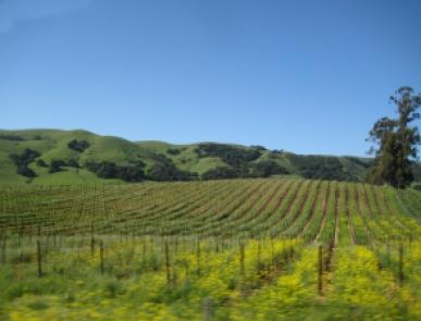 sonoma-california-che-bel-posto