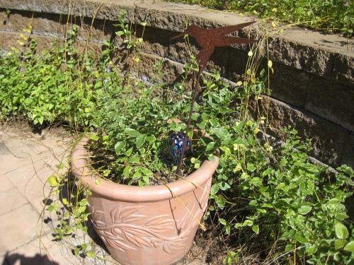 mio-giardino-una-giungla