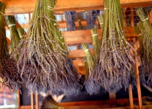 lavanda-many-uses-lavender-cooking-cleaning