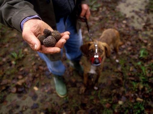 tartufaio-truffle-hunter-Umbria-Gubbio